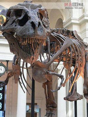 象 骨骼结构